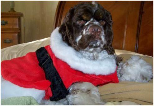 dog_Santa