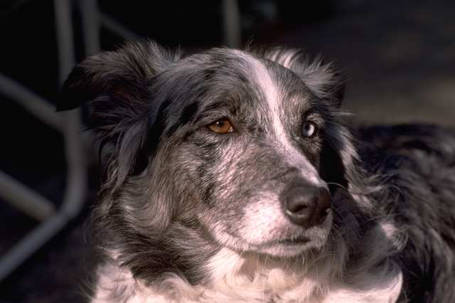 Can Dogs Help People Live Longer Lives?