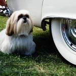 Insider Secrets: Pet-Friendly Potty Break Tips and TV