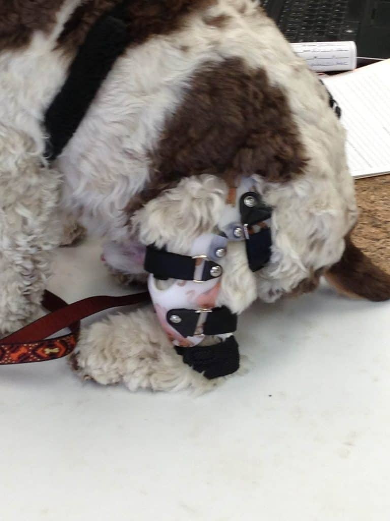 How a Stifle Brace Saved My Dog from ACL Surgery - Fidose of Reality