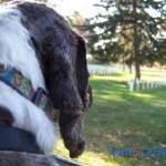Arlington National Cemetery is Dog Friendly
