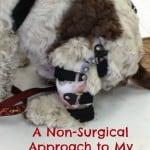 Dog ACL brace