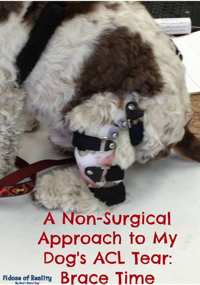 How To Wrap A Dog S Torn Acl