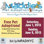 Free Pet Adoptions: Let a Dog Change Your Life