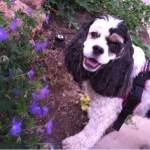 Dog Friendly Poppy Across America Diary