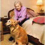 senior citizen dog