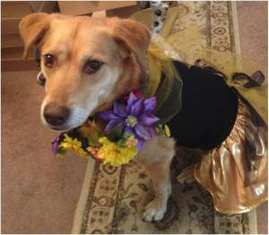dog flower girl