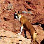 10 Summer Hazards for Dogs