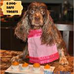 Six Dog Safe Treats We Wag For