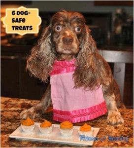 dog_safe_treats