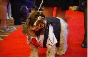 dog_tuxedo