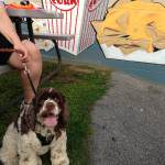 Drive-In Movies Earns Dog Badge in Pup Scouts