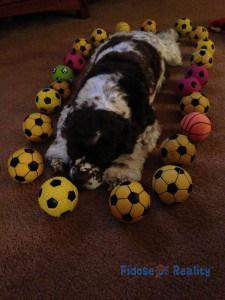 dog_balls