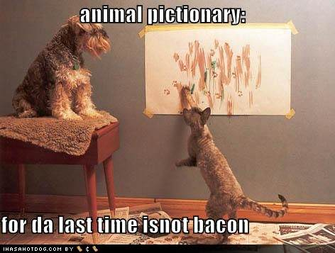 funny-dog-pictures-dog-and-cat-play-pictionary