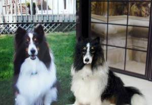 Lucy_Maloney_dogs