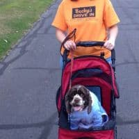 Canine stroller for Dexter