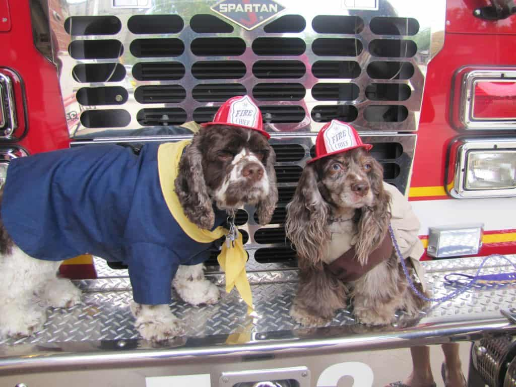 firehouse_dogs