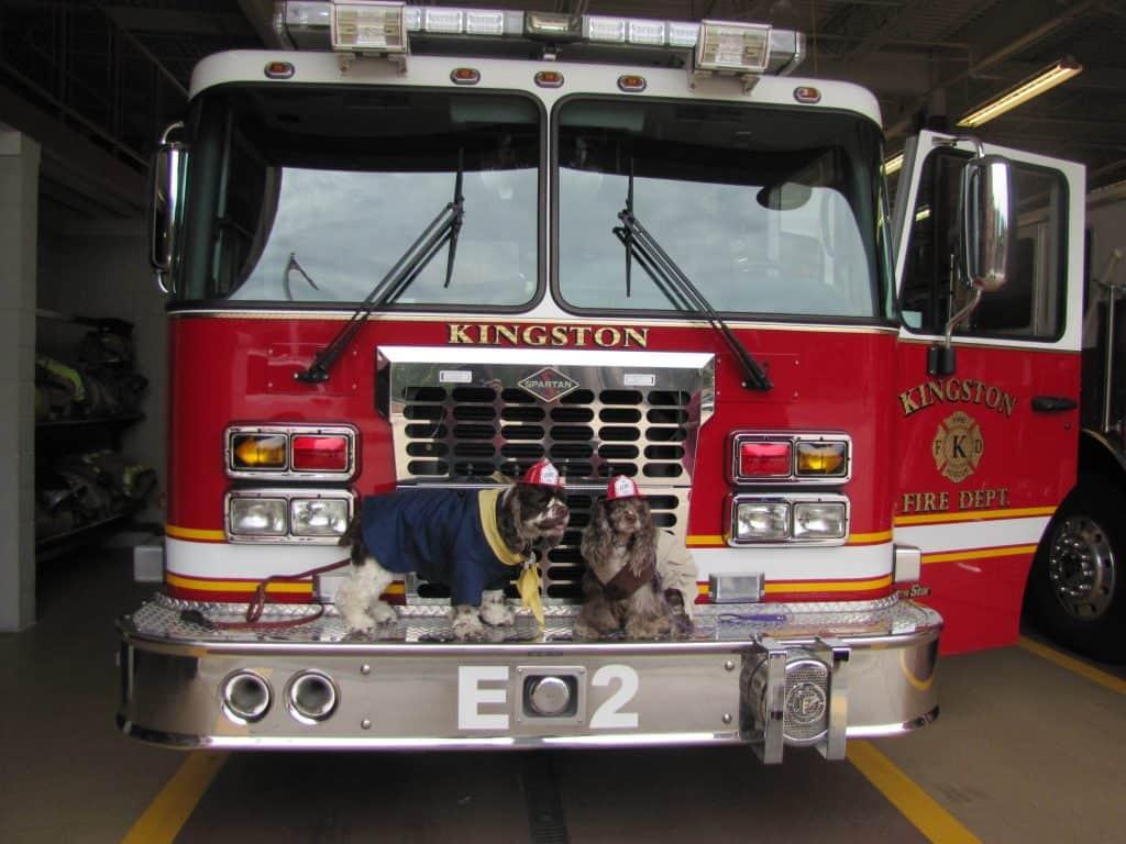 dog_fire_safety
