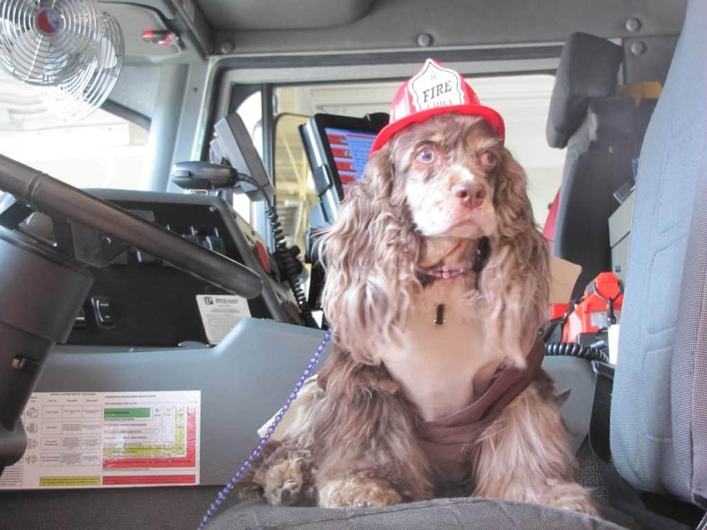 fire_safety_dog