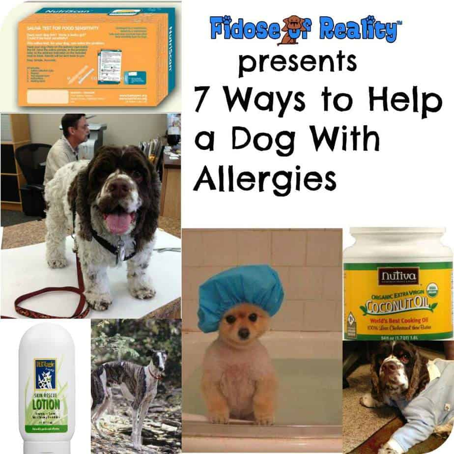 7 Ways To Help a Dog With Allergies - Fidose of Reality | Make Your Own Dog Food Allergies