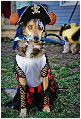 if fido is wearing a costume make sure he likes it that its comfortable and that he is familiar with walking in it never make a dog dress up if the dog - Pet Halloween Photo Contest