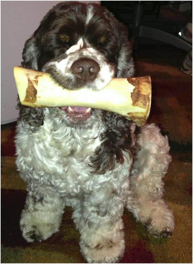 dog_bone