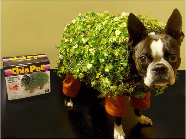 chia_pet_dog