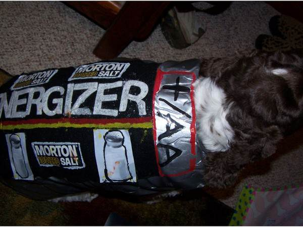 energizer_dog
