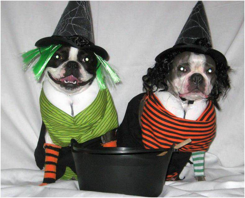 dog_witches