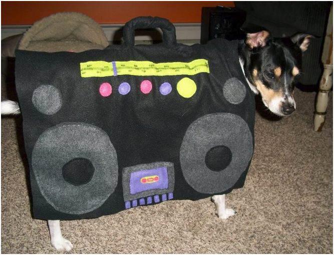 boombox_dog