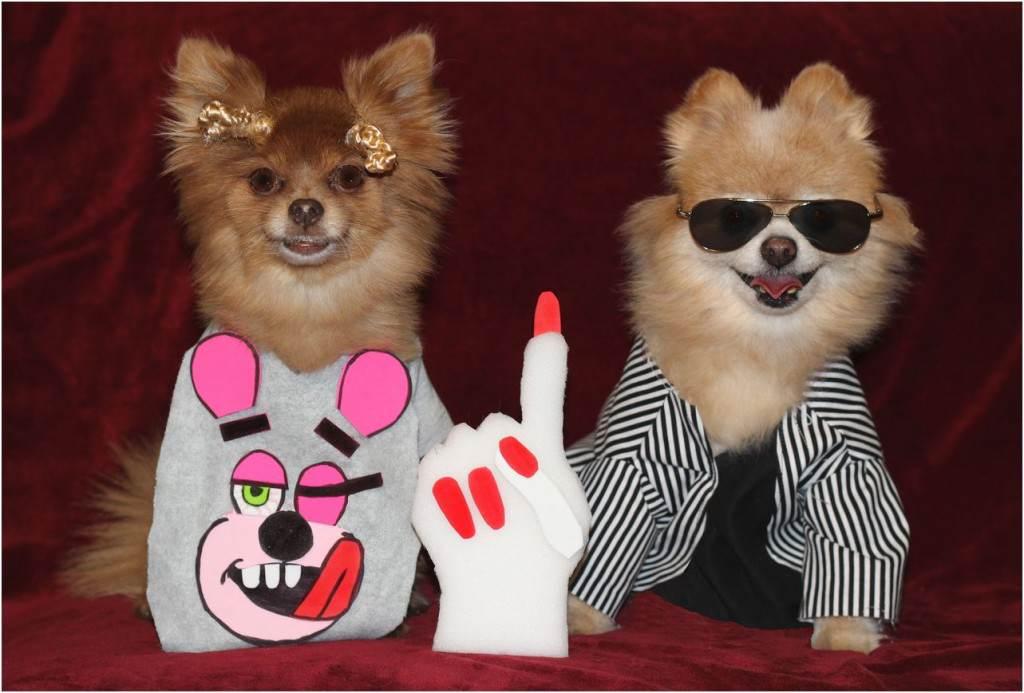 VMA_dogs