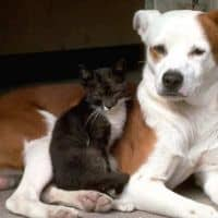 dogs_cats