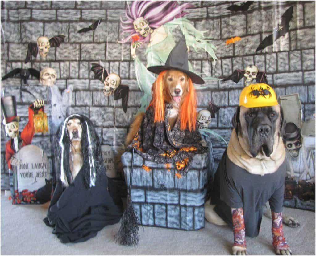 Halloween_dogs