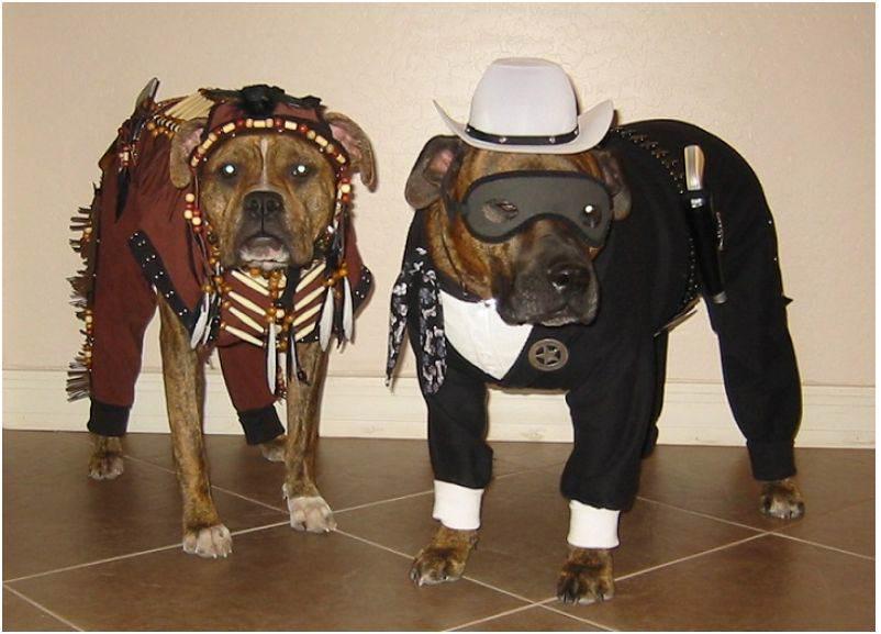 loneranger_dogs