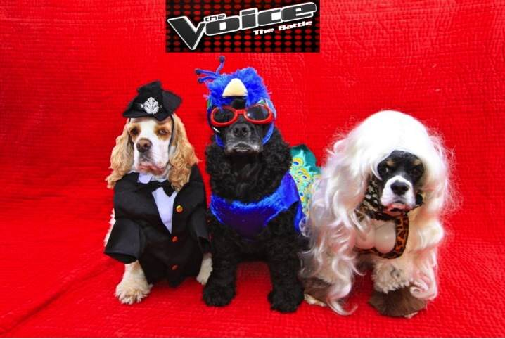 voice_dogs