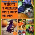 13 Dog Halloween Do's and Dont's