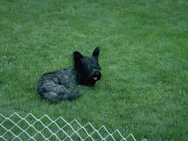 black_dog