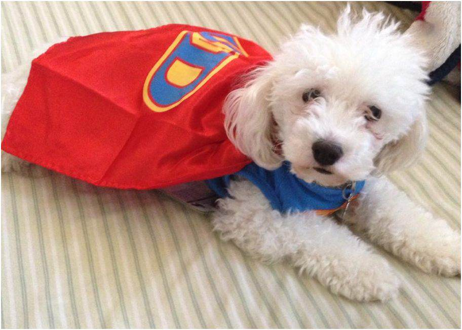 Halloween_dog