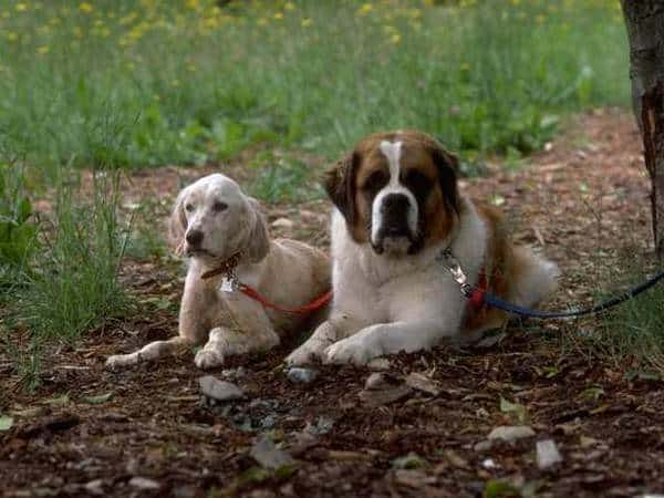 Eight Ways To Get Your Dog Stolen