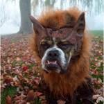 Fidose of Reality Dog Halloween Photo Contest Winners