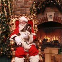 Santa_dog