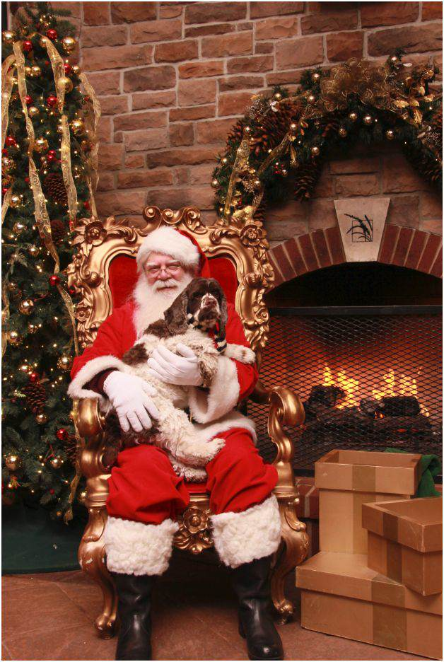 Six Dog Friendly Holiday Traditions to Start