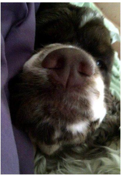 dog_face