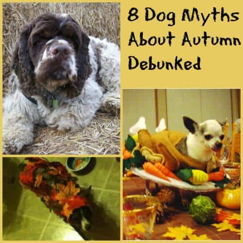 Eight Dog Myths About Autumn Debunked