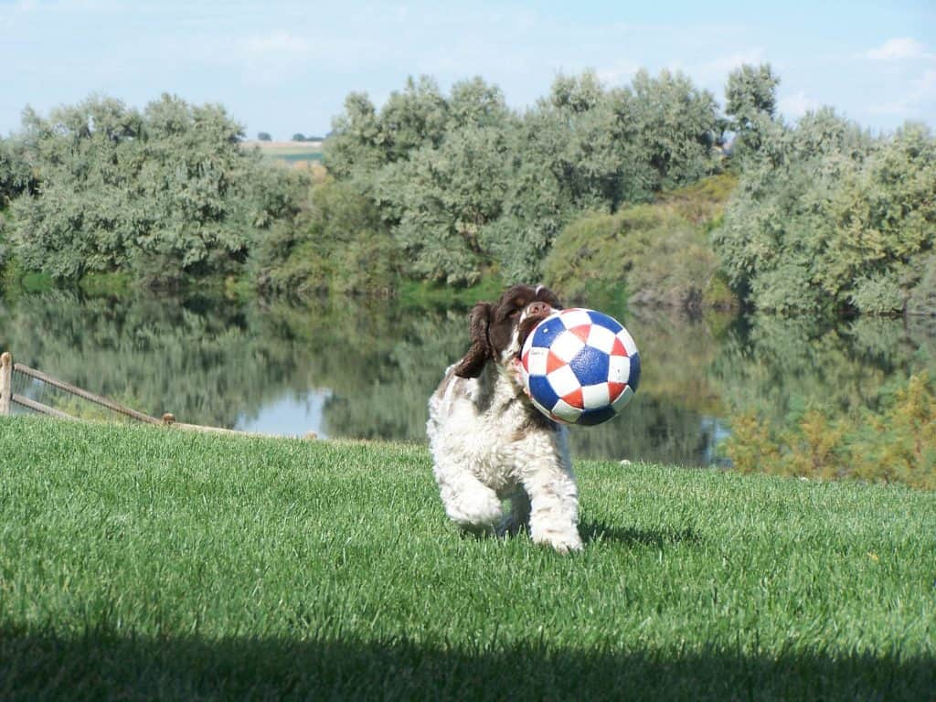 dog_ball