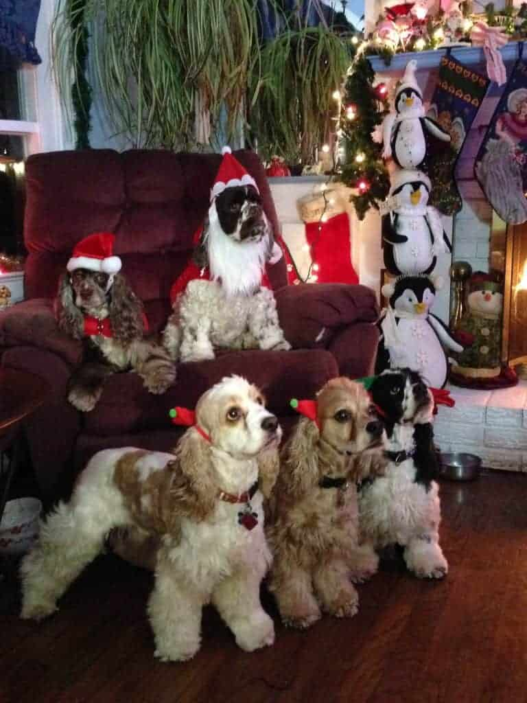 unique holiday presents for dogs and dog lovers fidose of reality