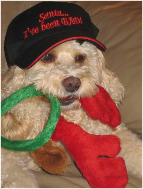 holiday_dog