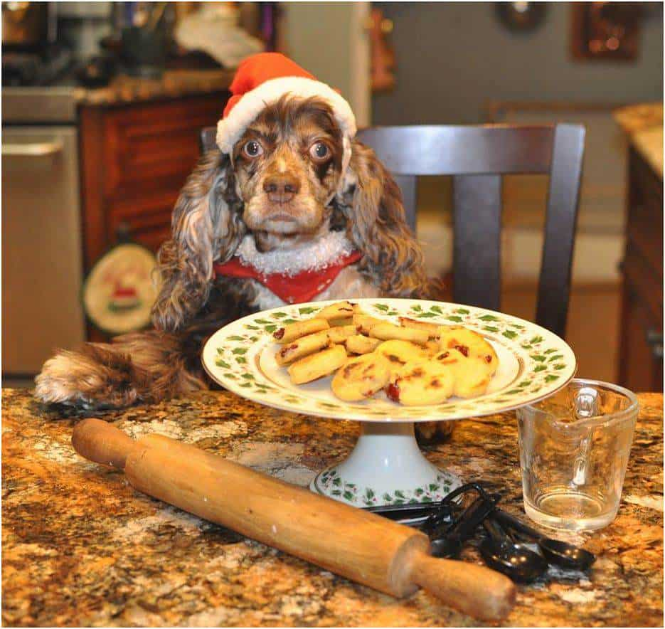 dog_recipe