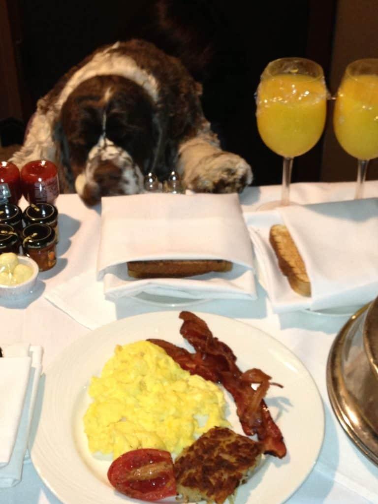 dog_breakfast