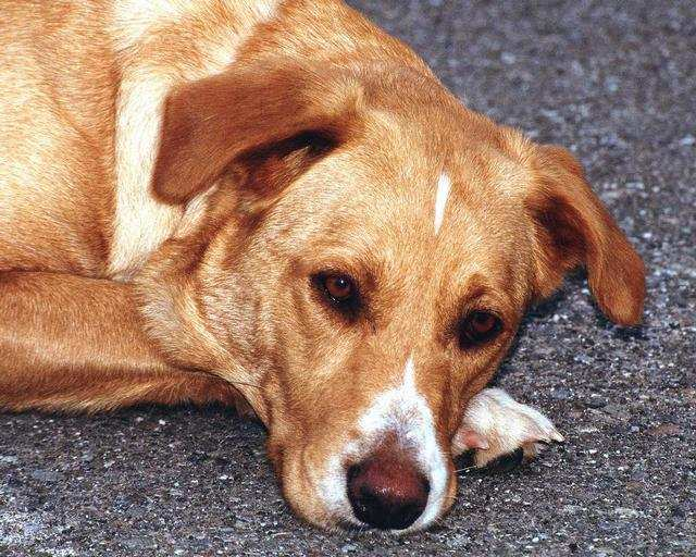 Do Bad People Raise Thin Dogs?
